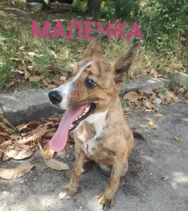 Malechka