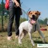 Световният ден на кучето – 26-ти август